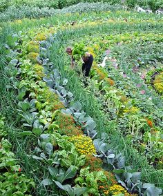 An excellent example of the principles of Permaculture at work on a veggie farm.