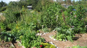 My Permaculture inspired garden.